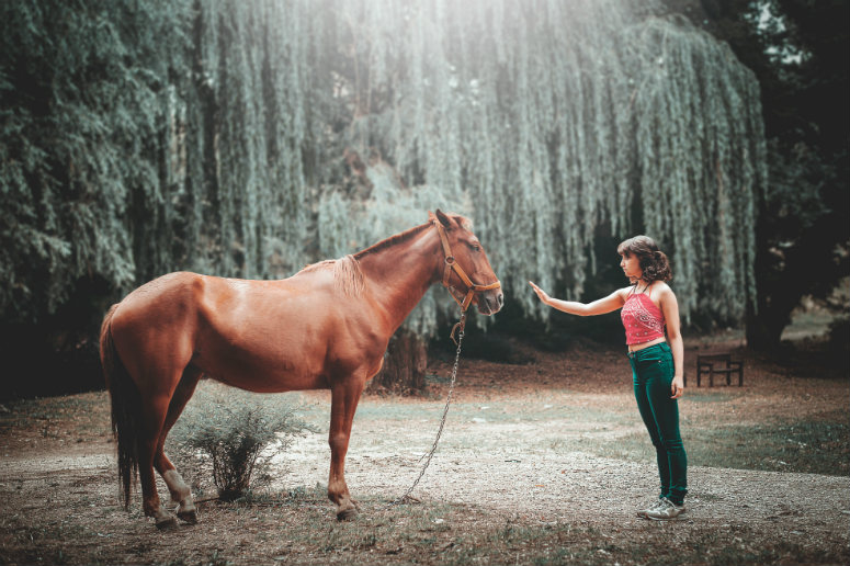 I Love Horses - So, Why is My Horse Business Stressing me out?