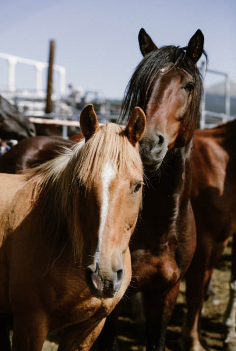Trust: the Real Secret to a Low Drama Horse Boarding Barn